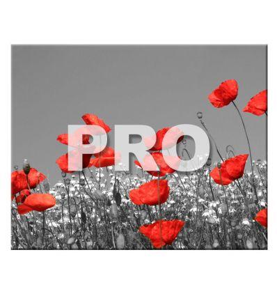 Carrelage Photo 20 x 25 PRO