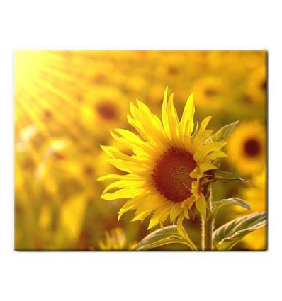 Carrelage Personnalise Photo 20 x 30